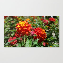 NoCal Lantana Camara Canvas Print