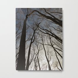 Woods of Arrowtown Metal Print