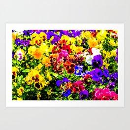 Viola Tricolor Pansy Flowers Art Print