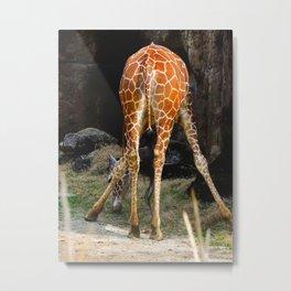 Baby Giraffe Butt Metal Print