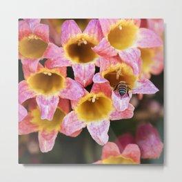 Tangerine Beauty Cross Vine with a Bumblebee Metal Print