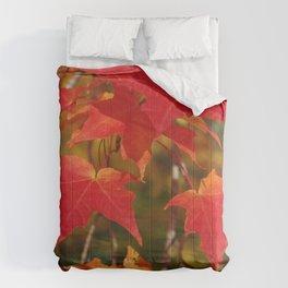 Fiery Autumn Maple Leaves 4966 Comforters
