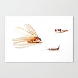 Winged Termites Canvas Print