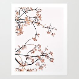 Tree Branches Photography Art Print