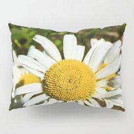 Daisy, Daisy Pillow Sham
