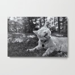 Cheeto the Cat Metal Print