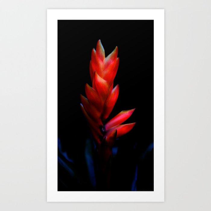 """""""Fired Up Petals"""" Art Print"""