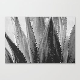 Amazing Agave - Black and White Canvas Print