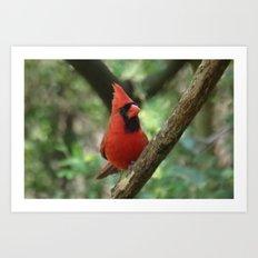 Northern Cardinal (male) Art Print