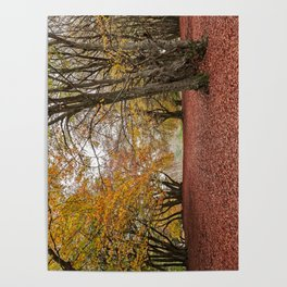 Autumn in the woods of Canfaito park, Italy Poster