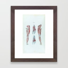 Vintage Anatomy of Human Legs and Feet Framed Art Print