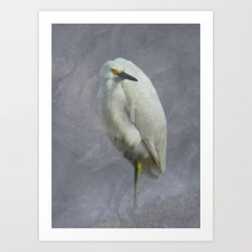 Snowy Egret at Rest Art Print