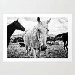 Desert Horse, I Art Print