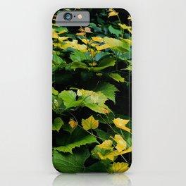 Wild Grape Leaves iPhone Case