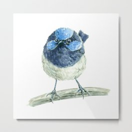 Fairy wren bird Metal Print