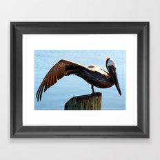 Pelican Wing Framed Art Print