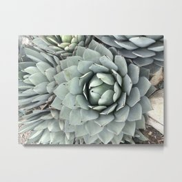 More Cacti Metal Print