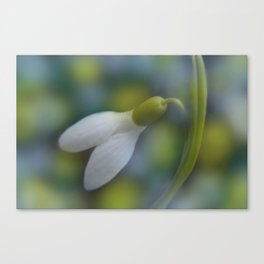 little pleasures of nature -8- Canvas Print