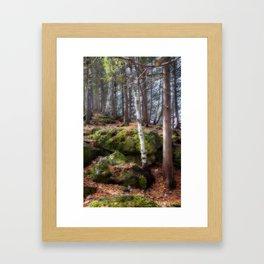 Dreamforest1 Framed Art Print