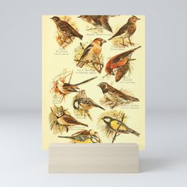 William Playne Pycraft - A Book of Birds (1908) - Plate 26: Larks, Tits and Buntings Mini Art Print