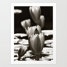 Water Lily's in the Sun Art Print
