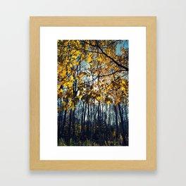 Fall in Ashby  Framed Art Print
