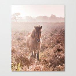 Wild pony on the Posbank- Netherlands Canvas Print