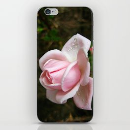 Blooming Light Pink Rose with Water Drops iPhone Skin