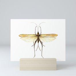 Katydid Mini Art Print