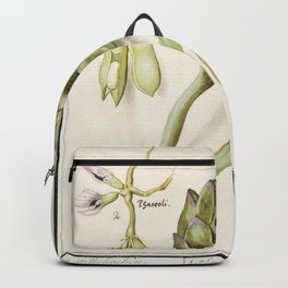 Artichoke Cynara scolymus broad beans Vicia faba and lampion plant Physalis (1596-1610) by Anselmus Backpack