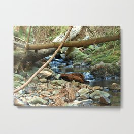 River Stream at Tilden Park Metal Print