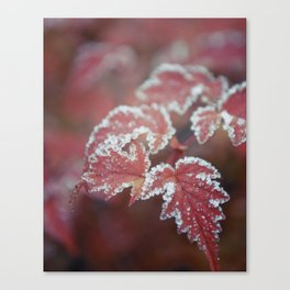 White Laced Canvas Print