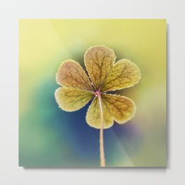 Heart-shaped Clover Oxalis Macro. St Patrick's Day Metal Print