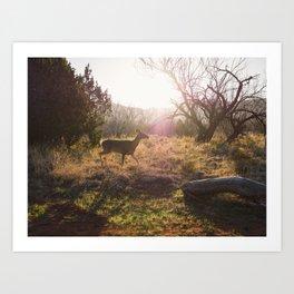 Doe in the morning sun. Palo Duro Canyon, Texas. Art Print