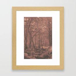 New England Woods Framed Art Print