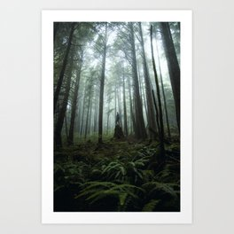 Olympic Forest Art Print