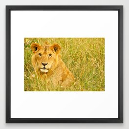 African Lion Framed Art Print