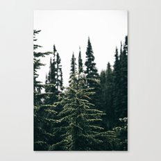 Grey Jay in The Trees Canvas Print
