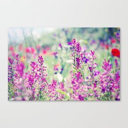 Little Dreams Canvas Print