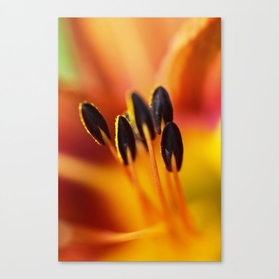Orange Detail (lily) Canvas Print