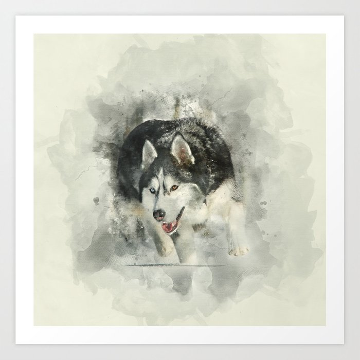 Siberian Husky With Two Different Color Eyes Watercolor Art Print