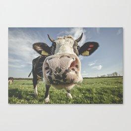 Inquisitive Cow Canvas Print