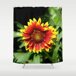 Gaillardia (Blanket Flower) Close-up   Shower Curtain