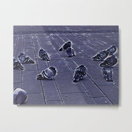 Pigeons staying together to warm up Metal Print