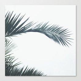 palmtree Canvas Print
