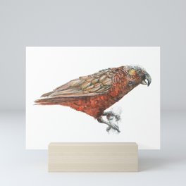 New Zealand parrot, the Kaka Mini Art Print