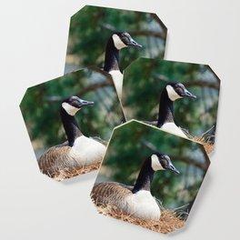 Nesting Canadian Goose Coaster