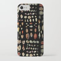 shells iPhone & iPod Cases featuring Shells by Good Sense