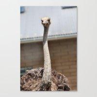 ostrich Canvas Prints featuring Ostrich :) by IowaShots