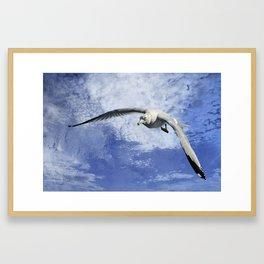Ring Billed Seagull In Flight Framed Art Print